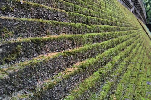 step green